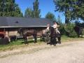 Hevosvieraita Martinpihalla