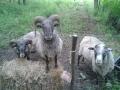 Lammaspojat Martinpiha