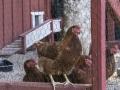 kanat Martinpihalla