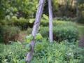 puutarha Martinpihalla