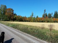 Martinpiha autumn and winter